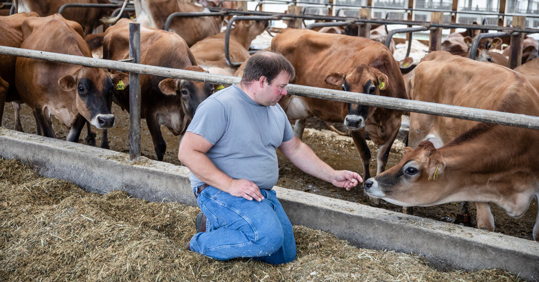 is-dairy-farming-cruel-to-cows
