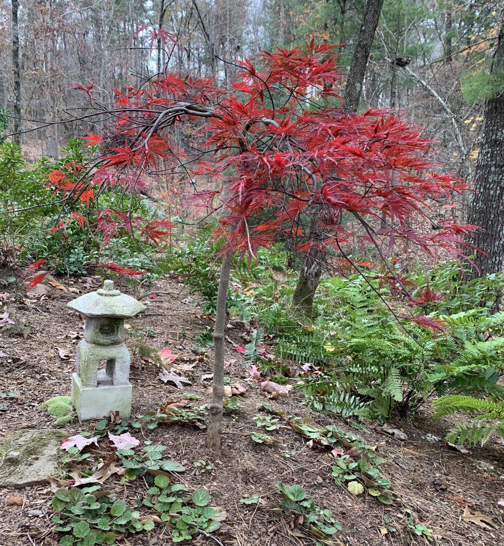 autumn-colors-in-north-georgia