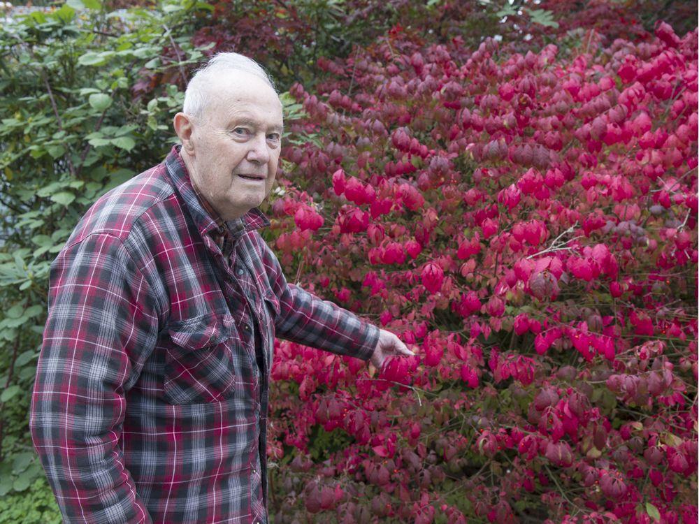 distinctive-backyard-set-to-maneuver-to-arboretum-in-langley