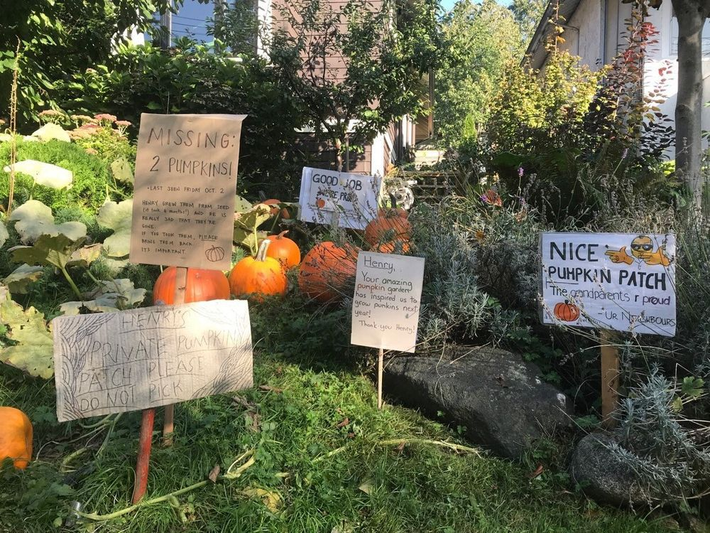 brian-minter-planting-pumpkins-brings-collectively-a-group
