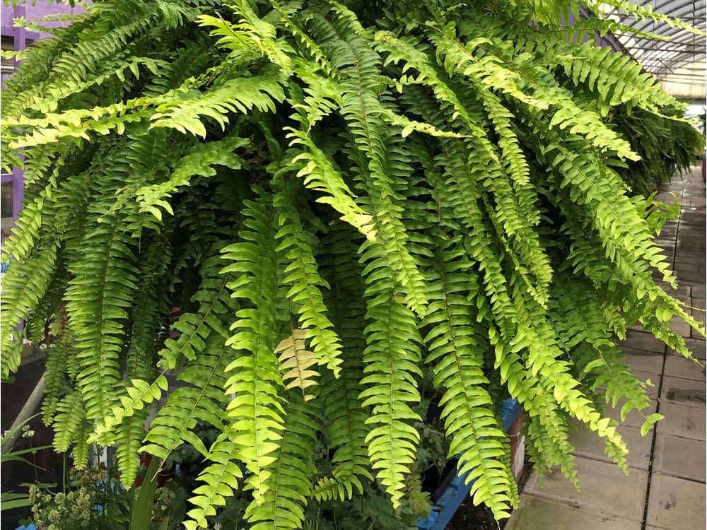 brian-minter-bringing-tropical-plants-back-indoors-can-be-tricky