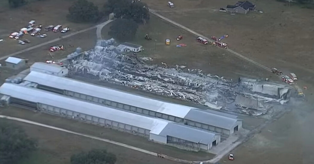 at-least-240000-chickens-are-killed-in-fire-at-florida-egg-farm