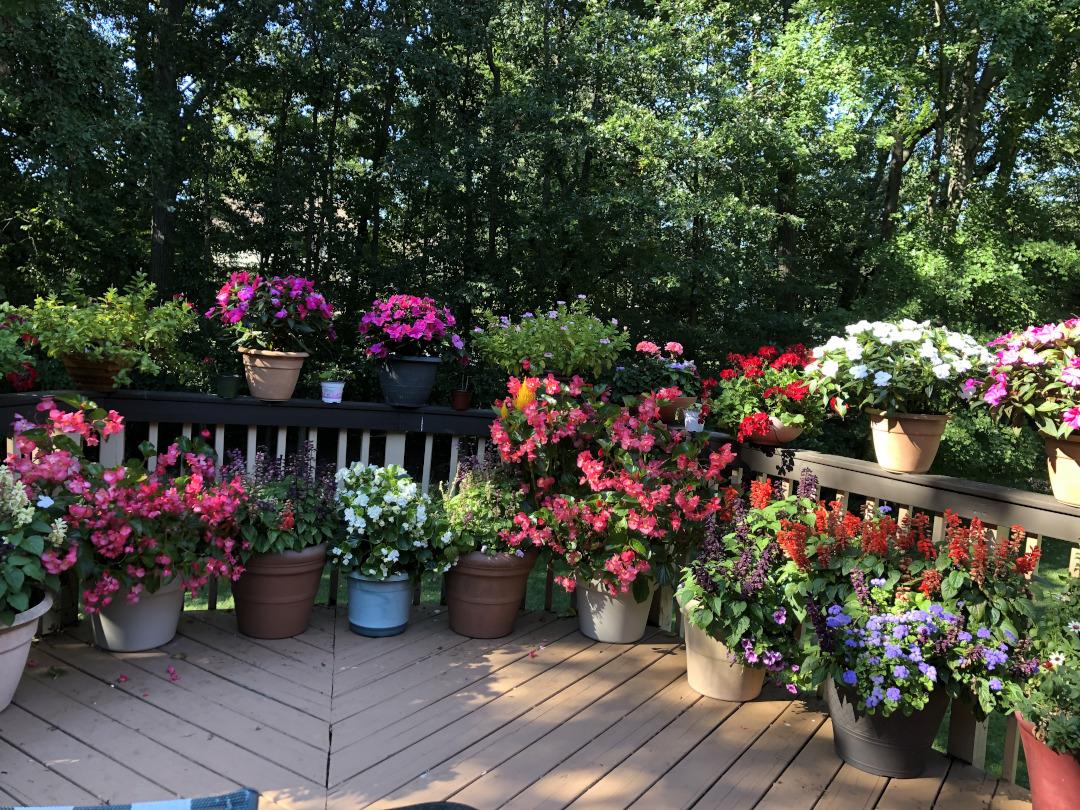 surinders-outdoor-garden-finegardening