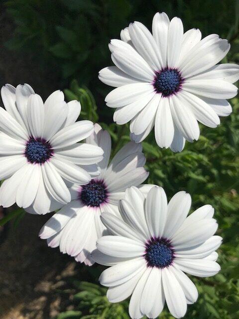 scenes-from-tinas-garden-finegardening
