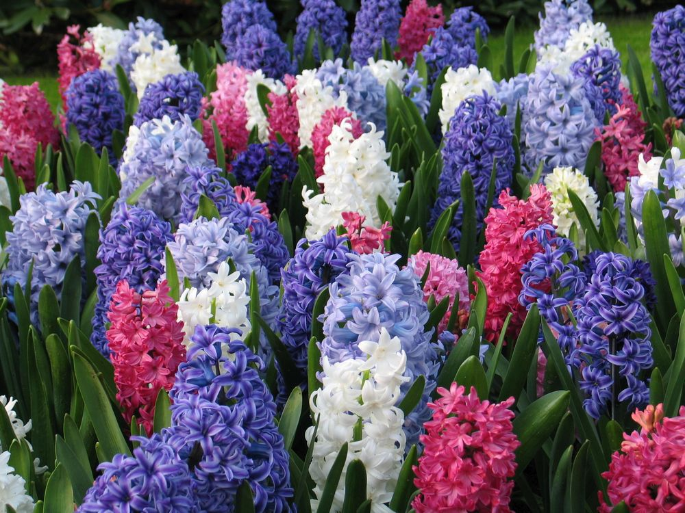 brian-minter-fall-bulbs-will-put-a-spring-in-your-gardens-step
