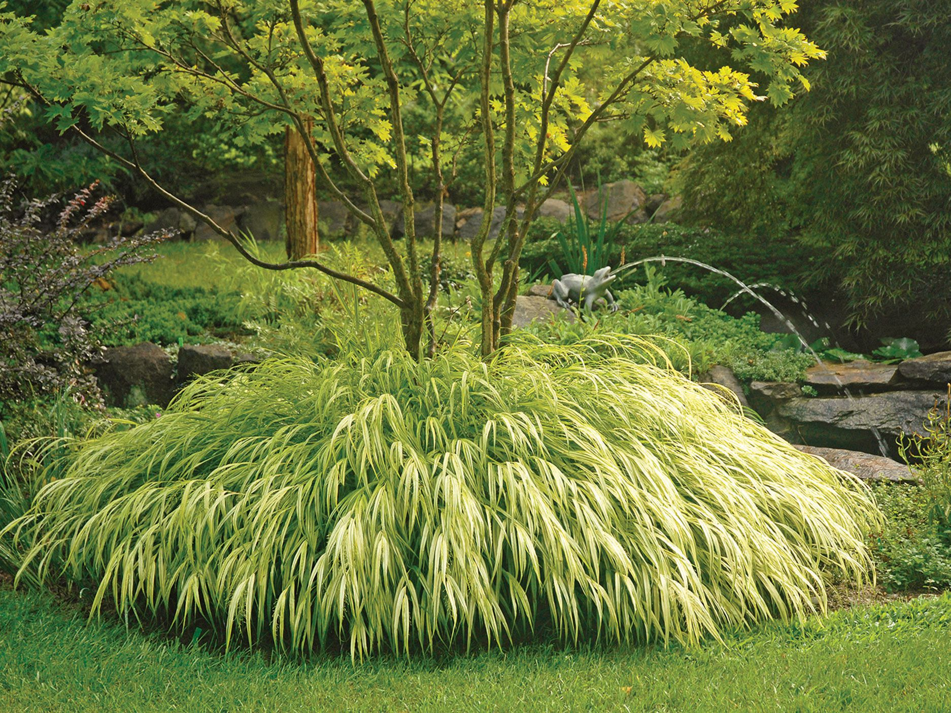 add-drama-to-your-fall-garden-with-this-fashionable-ornamental-foliage
