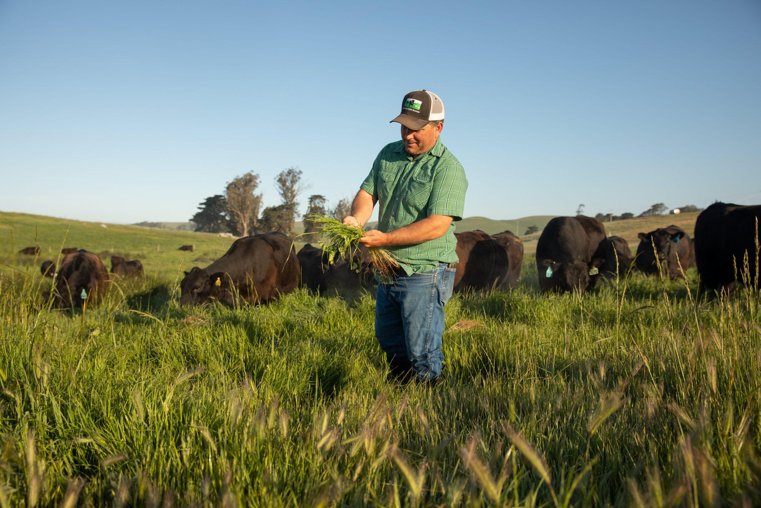 pay-farmers-to-cut-carbon-footprint