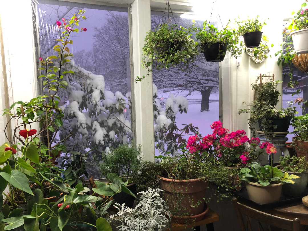 lauries-house-full-of-plants