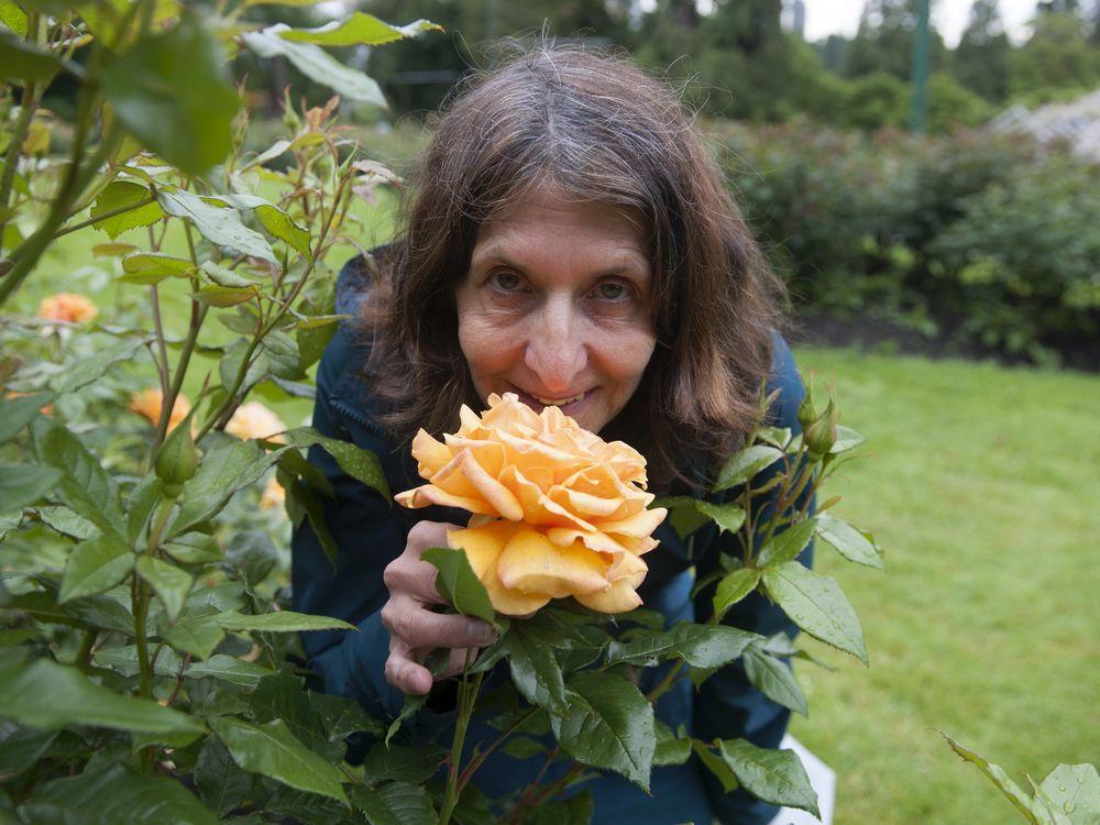 seasonal-parade-of-blooms-marks-century-in-stanley-park-rose-garden