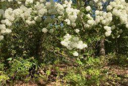 spring-in-lenas-garden-finegardening
