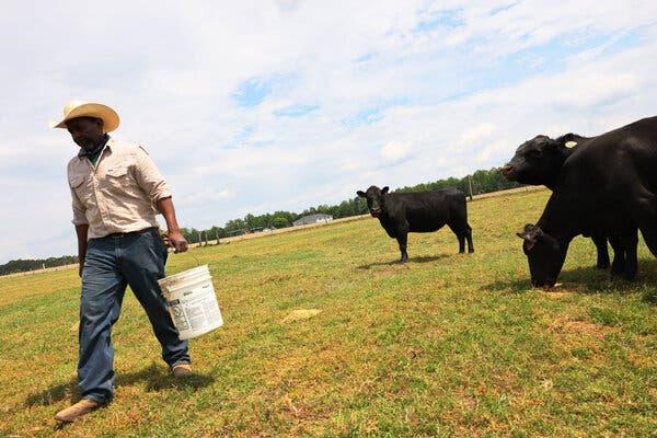debt-relief-payments-to-minority-farmers-will-start-in-june-live-updates