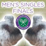Djokovic - Wimbledon Tennis Men's Finals 2021 Matteo Berrettini vs Novak Djokovic Funny Bunny Rabbit Prediction