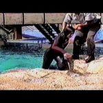 CNN Films' Blackfish: The truth behind orcas in capt...