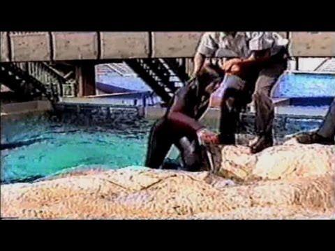CNN Films' Blackfish: The truth behind orcas in capt…